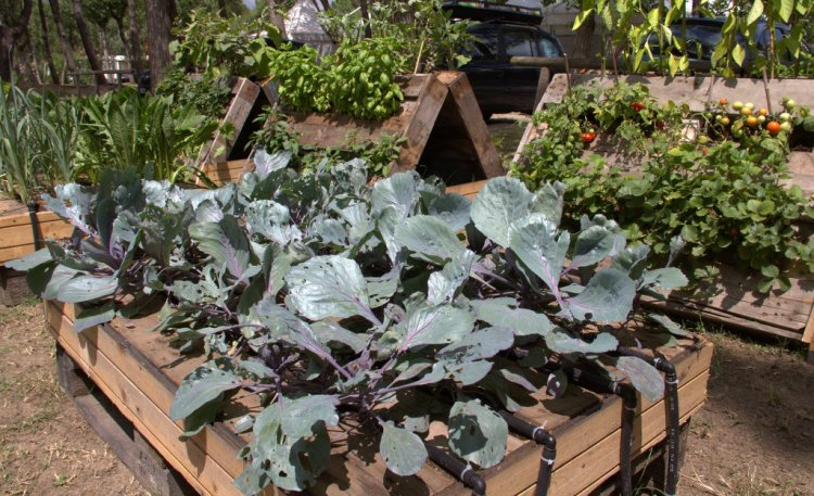 Camping Ca' Savio vegetable garden