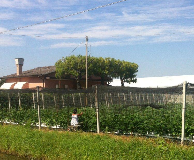 Cavallino Treporti: woman working