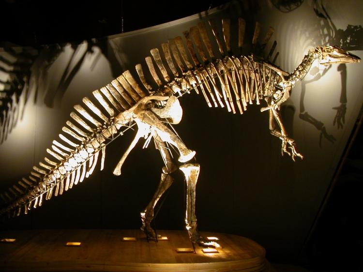 dinosauro a Venezia
