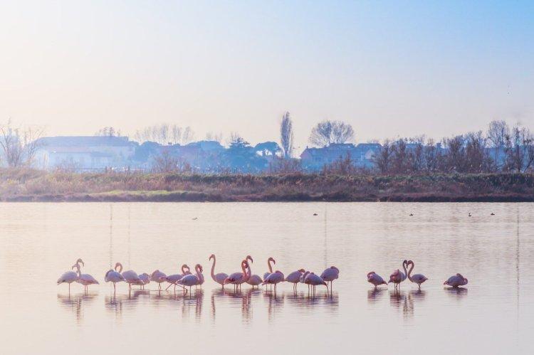 pink flamingos cavallino